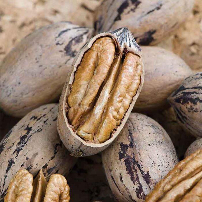 Sumner Pecan Nuts