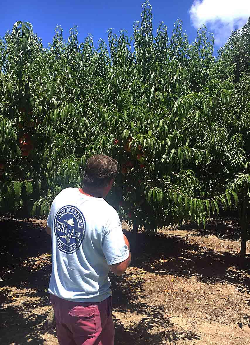 Benny Sawyer with Peach Trees