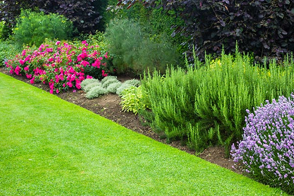 Landscaping Services Tidewater