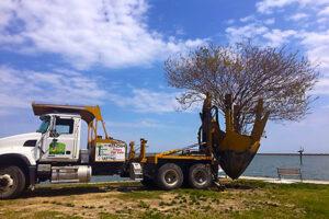 Tree Transplanter Tree Transplanting Service