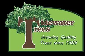 Tidewater Trees Logo